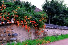 Country Life, South Korea, Still Life, Scenery, Exterior, Watercolor, Garden, Nature, Flowers