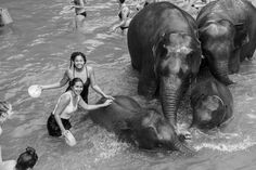 Elaisha Jade visits the Elephant Jungle Sanctuary in Chiang Mai for a half day experience. Read what it was like to meet the elephants and have a mud bath with them. Mud Bath, Chiang Mai Thailand, Jade, Elephant, Adventure, Animals, Animaux, Animal, Animales