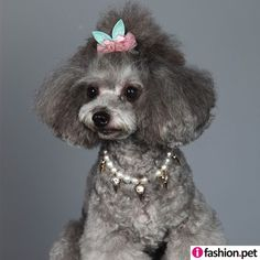 Pet Jewelry Pet Pearl Necklace-Ifashion.pet, is an online Web portal for Pet Retailers to purchase wholesale pet supplies pet collars & pet accessories for pet salons.