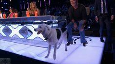 America's Got Talent 2017 Sara & Hero Judges' Comments Judge Cuts Talent Show, America's Got Talent, Love Simon, Movie Memes, Season 12, Amazing Dogs, Judges, Best Dogs, Hero
