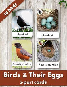 Birds And Their Eggs – Montessori Nomenclature Cards Montessori Science, Montessori Baby, Montessori Trays, Montessori Bedroom, Spring Activities, Preschool Activities, Birds For Kids, Easter Garden, Different Birds