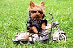 Lil biker dude