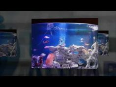 HASSLE FREE RENT AQUARIUM FROM LESS THAN £4.00 PER DAY. Fully Serviced By Our Experts Fully Automated Systems Everything Included 100% Tax Deductible for businesses http://rentaquarium.co.uk/ #RentAquarium, #RentanAquarium, #AquariumLondon, #LondonAquarium, #London