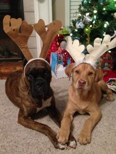 Merry Christmas from Mack and Buddy