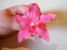 Cymbidium orchids Instructions