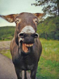Estes são os 30 animais mais felizes do mundo e eles vão te fazer sorrir agora. É hilário!