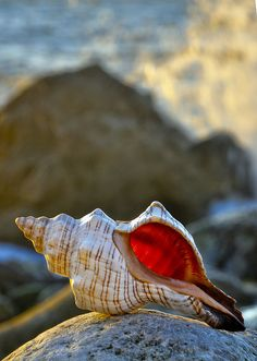 shell http://www.pinterest.com/lydilee/sister-susie-sells-sea-shells/