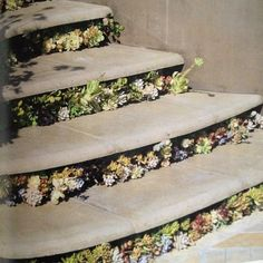 Landscaping inspiration: stair detail with succulents