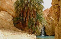 Chebika oázis, Tunézia