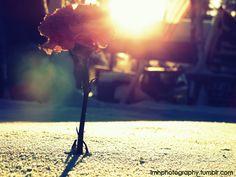 Lovely.. Small Things, Lens, Universe, Concert, Photography, Fotografia, Photograph, Fotografie, Klance
