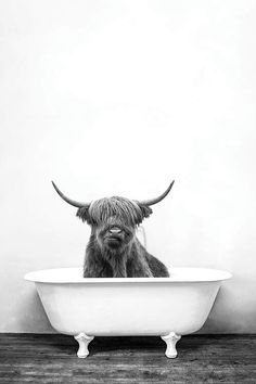 Highland Cow In Bathtub Black And White Canvas . Black And White Picture Wall, Black And White Wall Art, Black And White Aesthetic, Black And White Pictures, Animals Black And White, Black And White Posters, Highland Cow Art, Scottish Highland Cow, Highland Cow Canvas