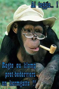 22 Funniest Monkey Face Pictures That Will Make You Laugh Funny Monkey Pictures, Face Pictures, Memes Super Graciosos, Funny Spanish Memes, Spanish Quotes, Chimpanzee, Cute Funny Animals, Funny Monkeys, Funny Images