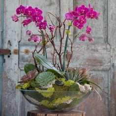 15 The Best Indoor Plants For The Beauty And Natural Air Purity Of Your Home Phalaenopsis Orchideen Zimmerpflanzen 01 Orchid Terrarium, Orchid Planters, Orchid Pot, Orchids Garden, Indoor Orchids, Potted Garden, Terrarium Ideas, Orchid Flower Arrangements, Orchid Centerpieces