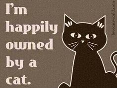 I'm happily owned by a cat