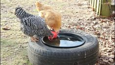 Preventing Livestock Water Containers From Freezing - YouTube