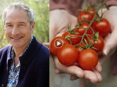 Particulièrement savoureuses, les tomates cultivées au jardin ne sont pas comparables avec celles vendues sur les étals. Pour bien s'y prendre, découvrez...