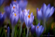 Away with winter blues by Cor de Hamer on 500px