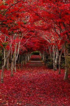 Roter Blüten Tunnel