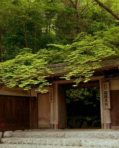 新緑 - 瑠璃光院 / Rurikou-in Komyo-ji Temple by Active-U, via Flickr