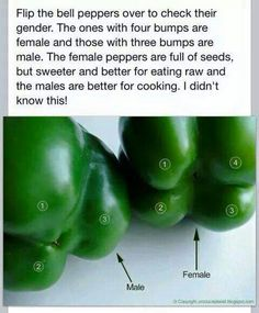 How to best choose a bell pepper for eating raw or cooking. FEMALE is better for eating raw and MALE is better for cooking.