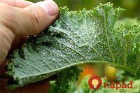 Ako som sa bez chémie vysporiadala s voškami, larvami a čiernymi muškami na listoch: Funguje to výborne!