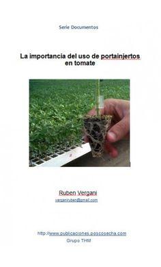 La importancia del portainjertos en tomate - publicaciones.poscosecha.com