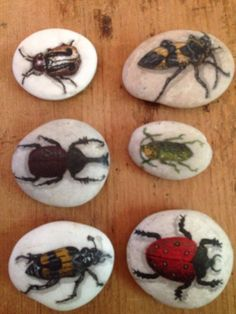 Set+Of+6+Hand-Painted+Beetle+Bug+River+Rocks+From+Thailand+Signed+By+The+Artist!+