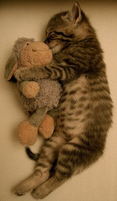 Just cuddling with my stuffed animal! Adorable kitten cuddling with it's special toy. #kitten #cat #animal