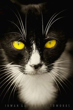 """""""It is in the eyes that their magic resides."""" --Arthur Symons"""