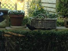 Om, Plants, Planters, Plant, Planting