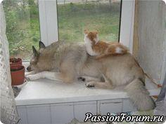 Как кошка с собакой?...