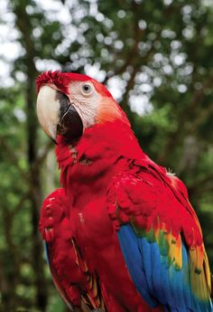 Top 10 Must-Visit Places of #Peru ~ #Amazon #Jungle