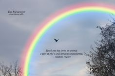 loss of dog poems and quotes Rainbow Baby Quotes, Rainbow Quote, Animal Poems, Cat Poems, Pet Loss Grief, Loss Of Dog, Rainbow Bridge Dog, Rainbow Promise, Pet Loss Quotes