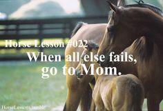 horse lesson #022