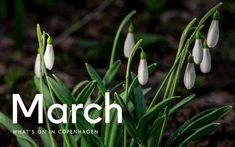 A calendar of Copenhagen events in English so that you know the best of what's happening this month.