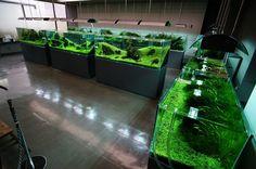 Nature Aquarium Gallery 2012 【6】 : ZERO-AQUA