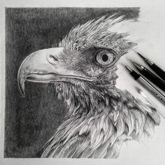 Monica est une artiste qui dessine des oeuvres d'un réalisme saisissant. Avec pour seuls outils des crayons à papier ou de couleur, elle donne vie à des portraits qu'on croirait encore plus vrais que des photographies. Découvrez le travail de cette femme au talent extraordinaire.Cliquez sur la photo pour voir les œuvres aigle