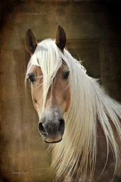 If I ever have  horse I want one like, this always said I wanted a horse with a blonde mane, beautiful