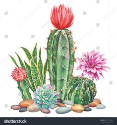 Watercolor with cactus garden. Illustration for greeting cards, invitations, and other printing projects. on white background. Cactus Painting, Watercolor Cactus, Cactus Art, Watercolor Paintings, Cactus Drawing, Cactus Decor, Art Floral, Cactus House Plants, Indoor Cactus