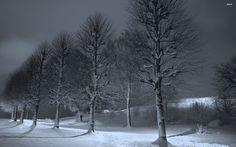 Snowy trees in the dark, Stavanger, Norway wallpaper