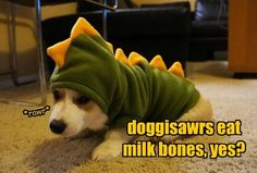 You're Welcome in Advance for These Corgis in Costume