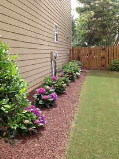 Landscaping idea for the front of the house using hydrangea bushes w/ mulch