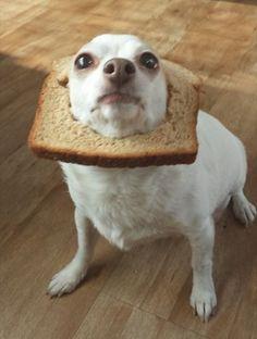 El nuevo tostaperro: