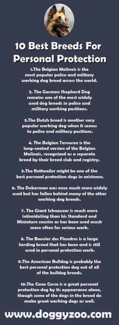 10 Best Breeds For Personal Protection