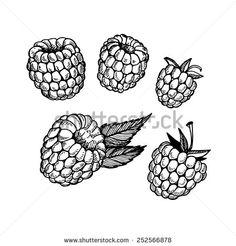 Raspberry Plant Stock Vectors & Vector Clip Art | Shutterstock