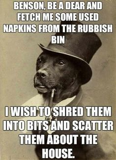 Gentleman dog has a request.