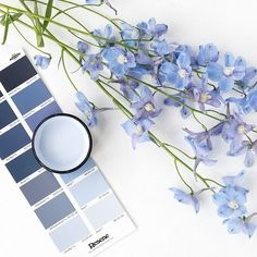 Saturday morning blooms and Resene Relax. Who loves getting fresh flowers in the weekend?  #Resene #colourpalette #summer #flatlay #blooms #moodboard #Reseneblues