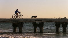 WAN-0000717 © WestPix PICTURE BY NIC ELLIS 17 SEPTEMBER 2014 THE WEST AUSTRALIAN Levi De Boni, 14 and his dog Monte make their way out along the jetty at Coogee Beach at sunset. Levi is a Coogee local and regularly visits the jetty to fish.