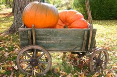 Georgia's loves this antique pumpkin cart; so right for decorating!