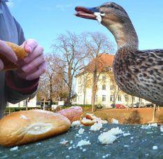 Hört endlich auf, die Enten zu füttern!